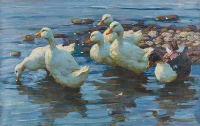 Les canards s'envolent