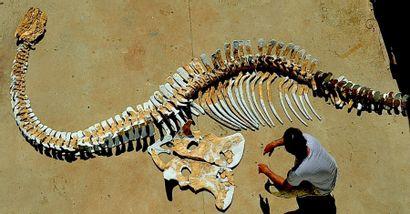 Drouot à l'ère des dinosaures