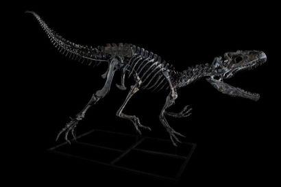 Enchères millionnaires pour deux dinosaures à Drouot