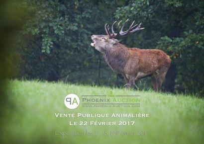 Vente publique d'art animalier à venir !