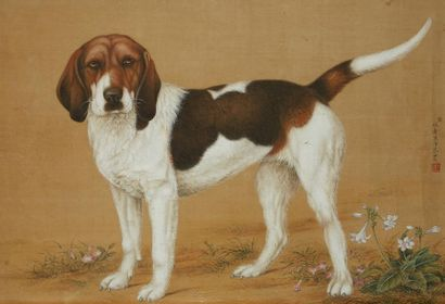 Chien de chasse chinois