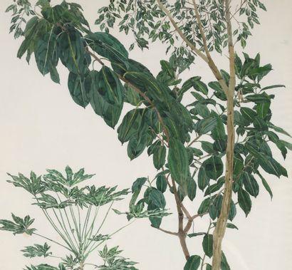 Plantes grimpantes