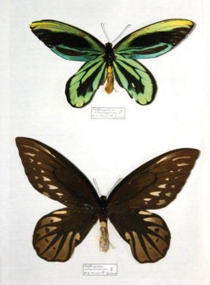 Papillons et Kachinas