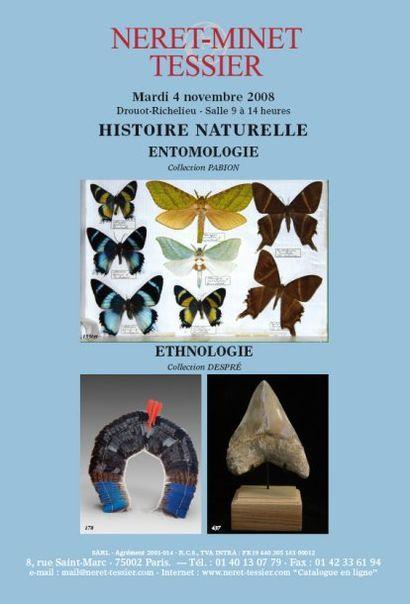 ENTOMOLOGIE et fossiles