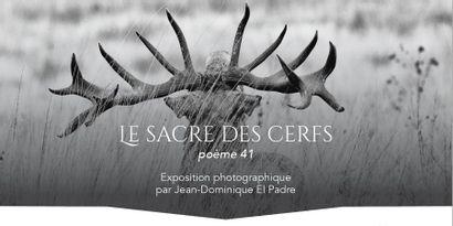 Le sacre des cerfs - Poème 41- Exposition photographique par Jean-Dominique El Padre