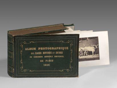 UN RARE ALBUM DE PHOTOGRAPHIES DU CONCOURS AGRICOLE DE 1856 PAR NADAR JEUNE