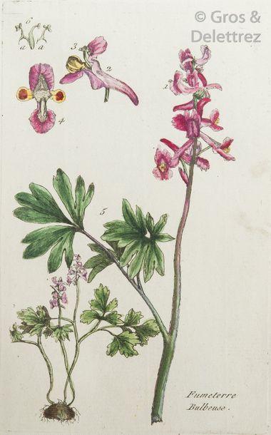 Pierre BULLIARD. Flora Parisiensis, or Descriptions and figures of plants that grow...