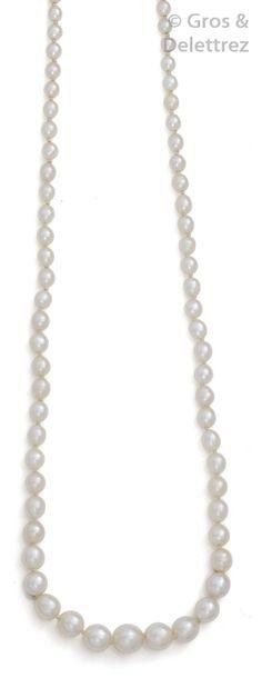 Collier de perles probablement fines en chute,...