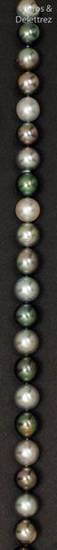 Collier de perles de cultures de Tahiti en...
