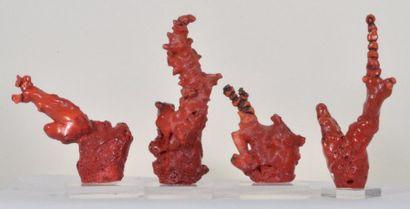 Quatre coraux fossiles de Chine teintés rouge...