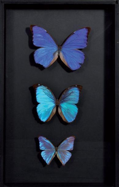 Une belle boite entomologique de collection...