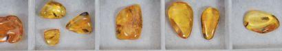 Treize beaux morceaux d'ambre Comprenant...