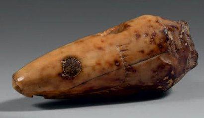 TETE DE SAUMON en ivoire à patine brune,...
