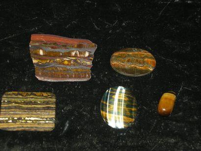 Lot de cinq jolies pièces polies d'ŒIL DE...