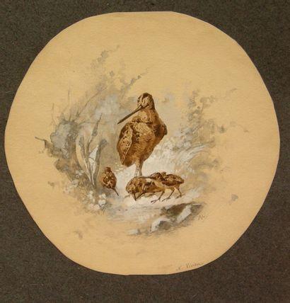 Narcisse VIVIEN  Volatiles et étude de pêches...