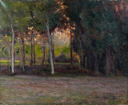 Erik SÄÄF (1856-1934)  Le sous bois  Huile...