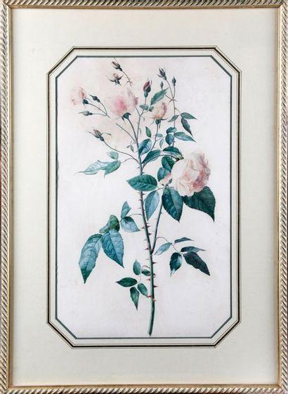 Attribué à Marie Edwige NEPVEU (1800-1867)