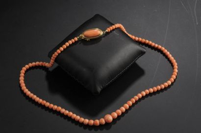 Collier de perles de corail en légère chute...