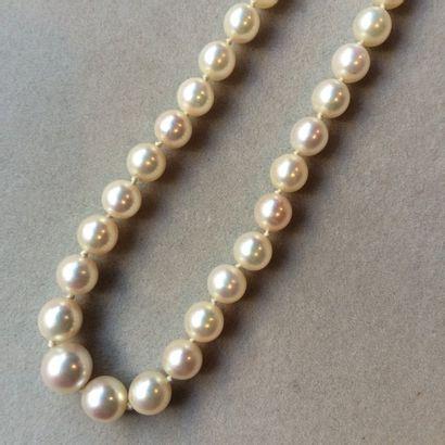 Collier de perles de culture en légère chute...