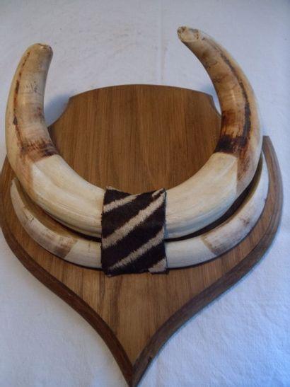 Phacochère d'Afrique (CH) : paire de grès...