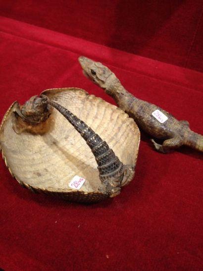 1 lot comprenant : - 1 crocodile du Nil juvénile...