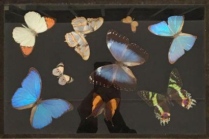Un cadre vitré comprenant différentes espèces...