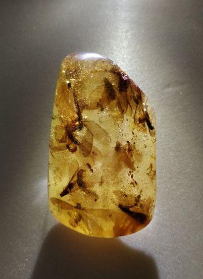 Bloc d'ambre jeune ou copal présentant différentes...
