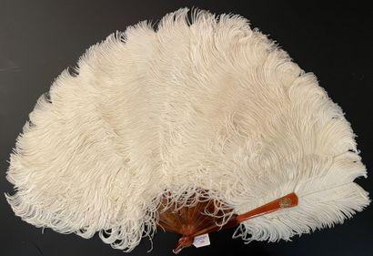 Autruche blanche, vers Éventail en plumes...