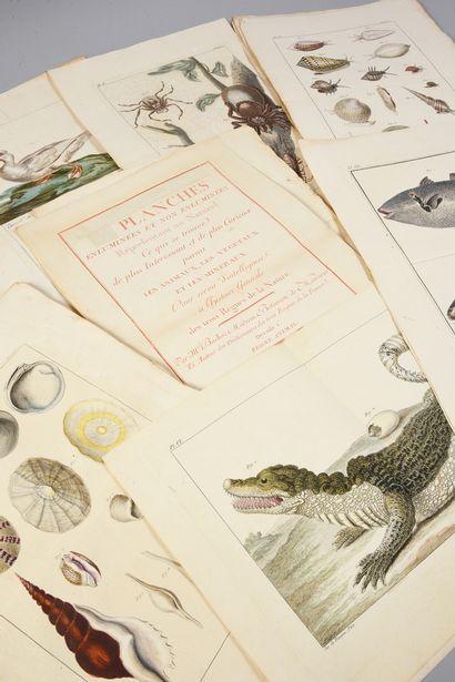 * [BOTANIQUE]. BUC'HOZ Pierre-Joseph (1731-1807). Première centurie de planches...