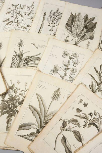 * [BOTANIQUE]. BUC'HOZ Pierre-Joseph (1731-1807). Histoire générale des animaux,...