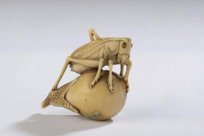 Netsuke en ivoire, sauterelle posée sur une...