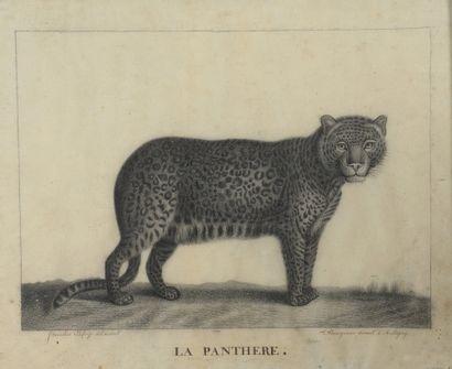Stanislas LAFORGE (XIXe)  La panthère et...