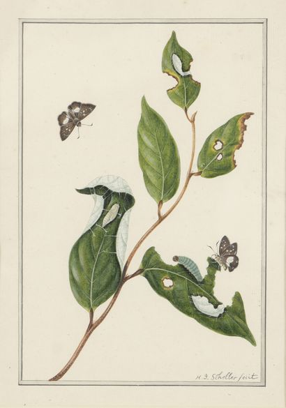 H.J. SCHELLER (XVIII-XIX)  Insectes dévorant...