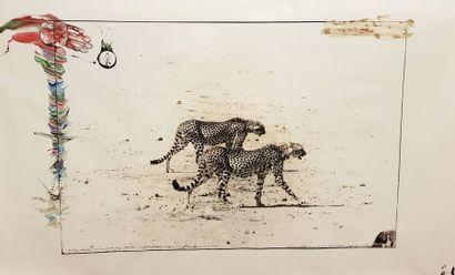 PETER BEARD 1938  Hunting Cheetahs on the...
