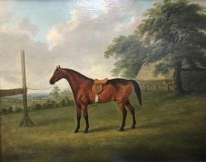 ECOLE ANGLAISE - XIXème siècle Cheval arnaché...
