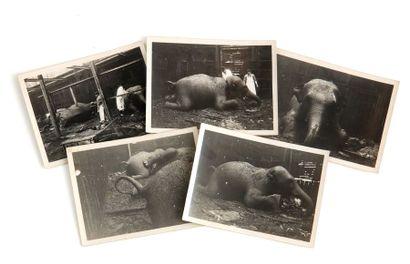 ANONYME. Éléphants morts (massacrés ? brûlés...
