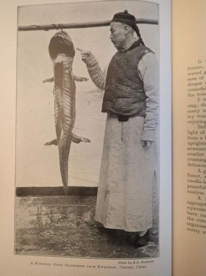 SOWERBY (Arthur de C.), Naturalist note-book...
