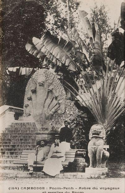 1920  L'arbre du Voyageur  Un ensemble de...