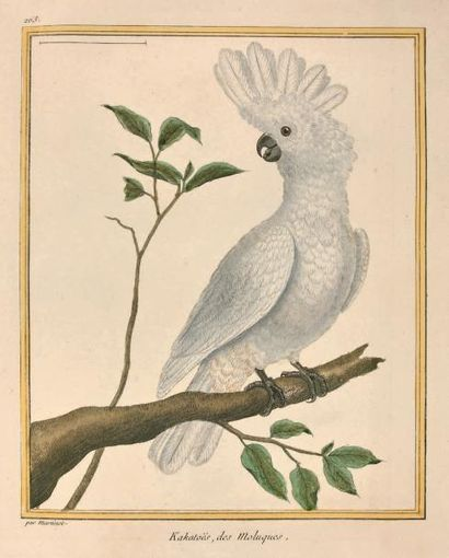 BUFFON Georges-Louis Leclerc comte de Histoire naturelle des oiseaux. Paris, Imprimerie...