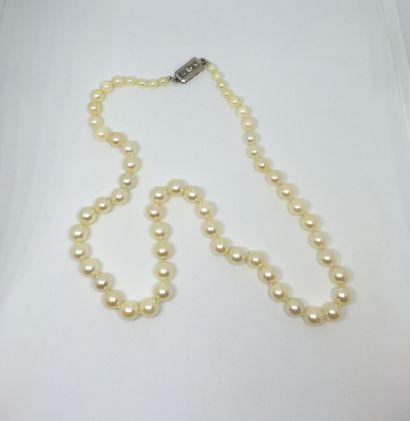 Collier chute de 60 perles de culture blanches...