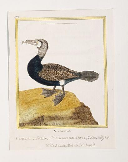 Georges-Louis LECLERC, comte de BUFFON (1707-1788)...