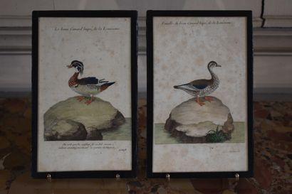Aaron MARTINET (1762-1841)  Le beau Canard...