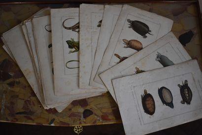 Lot de 42 planches tirées de l'Histoire naturelle...