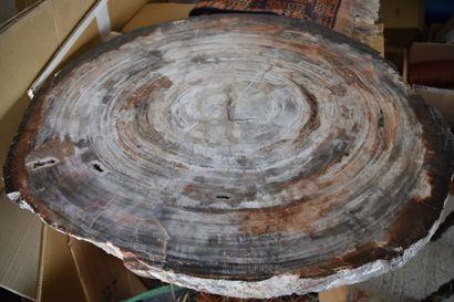 Coupe d'un tronc d'arbre en pierre fossilisée...