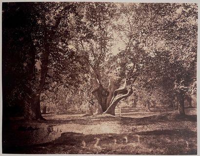 Gustave Le Gray (1820-1884)  Le Chêne creux,...