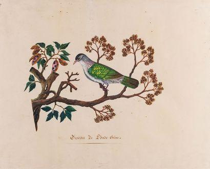 École FRANCAISE du XIXème siècle Oiseau de...