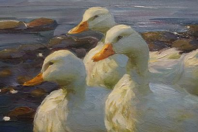 Alexander KOESTER (1864-1932). White ducks. Oil on canvas, signed lower middle right....