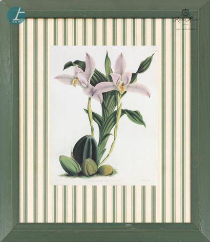 Lot de 13 pièces encadrées sur le thème des fleurs, reproductions.  Le plus petit...