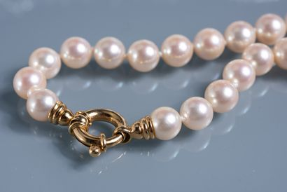 BEAUTIFUL NECKLACE OF cultured pearls choker. Gold clasp 18 ct. Diameter of the...