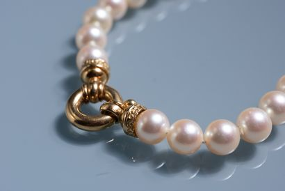 CHOKER PEARL NECKLACE made of 53 cultured pearls and clasp in 18 ct gold.  Diameter...